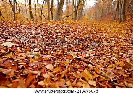 Forest with colorful autumn leaves - stock photo
