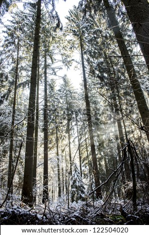 Forest with early melting snow with sun rays shining through tree crowns.