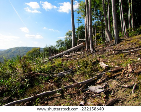 Forest with felling of cutted trees in Carpathian mountains in Ukraine. - stock photo