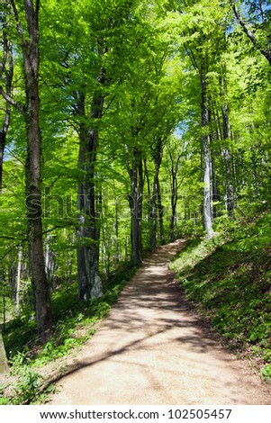 Forest with footpath in springtime