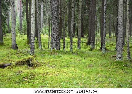 Forest with green bright moss - stock photo