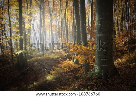 forest with light in autumn - stock photo