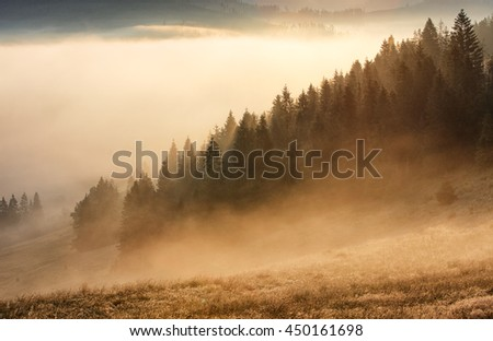 Forest with mist and sunlight, tree - stock photo
