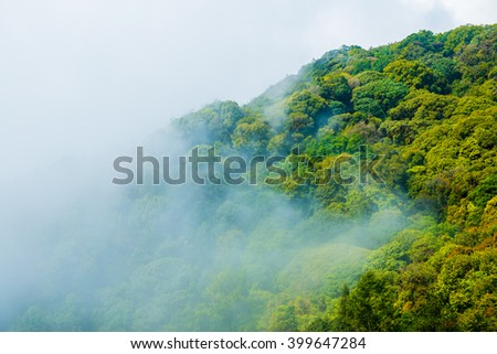 Forest with mist in national park, Thailand - stock photo