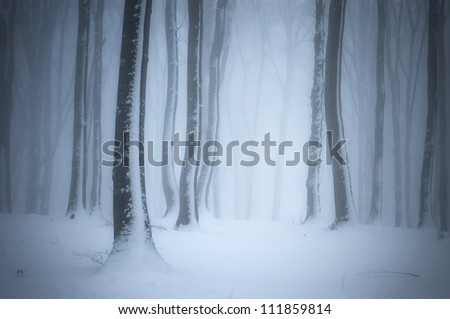 forest with mist in winter - stock photo