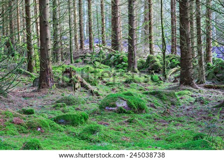 Forest with moss on the ground and an old stone wall - stock photo