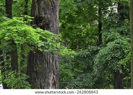 Forest with oak tree