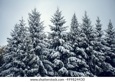 Snow covered stock images royalty free images vectors - Images of pine trees in snow ...