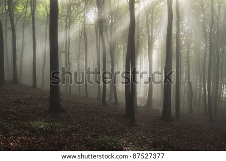 forest with sun rays and fog after rain - stock photo