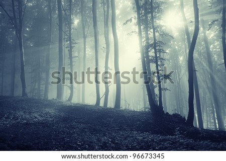 forest with sun rays through tree branches - stock photo