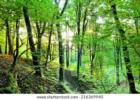 Forest with sunrays in the morning  - stock photo