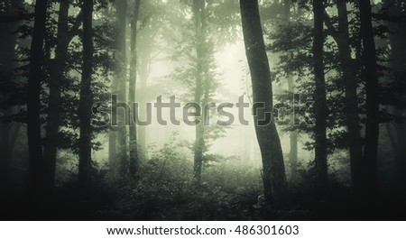 forest with trees in fog