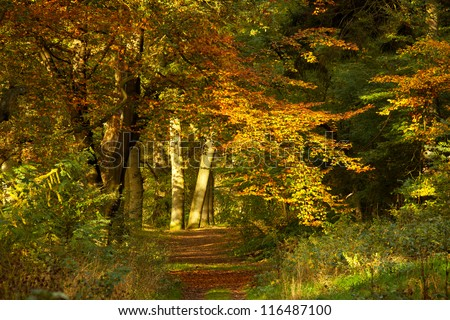Forest with vibrant autumn colors in The Netherlands - stock photo