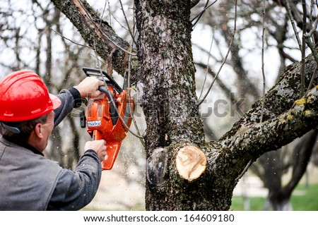Forest worker cutting trees with gasoline powered chainsaw - stock photo