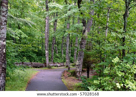 Forested campground path in the Kancamagus Pass of New Hampshire. - stock photo