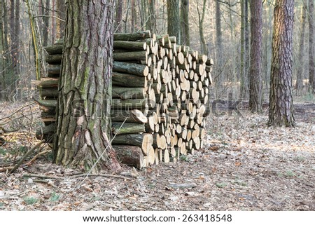 Forestry and timber harvesting in Poland - stock photo