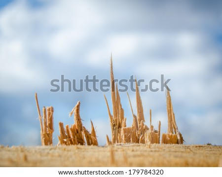 Forestry Image Of Wood Splinters Of Freshly Cut Tree - stock photo