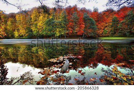 forests and streams - stock photo