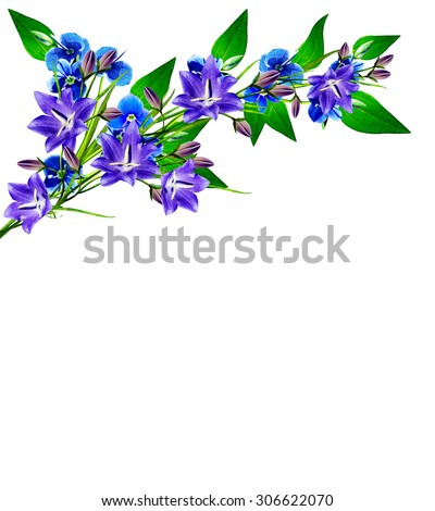 forget-me-flower isolated on white background. blue bel - stock photo