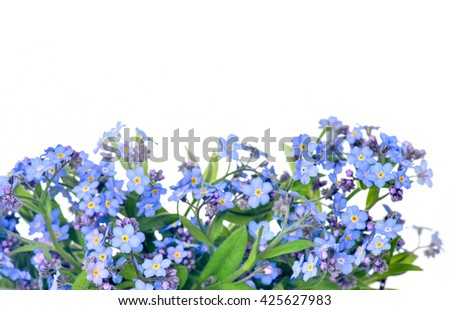 forget-me-flower on a white background. Arrangement of blue forget-me-not flowers isolated on white background