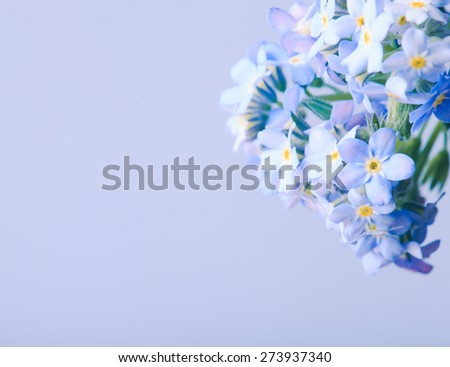 Forget-me-not flowers close up on a blue background - stock photo