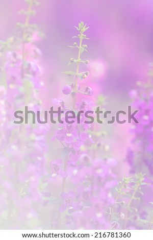 Forget Me Not in soft color and blur style for background  - stock photo