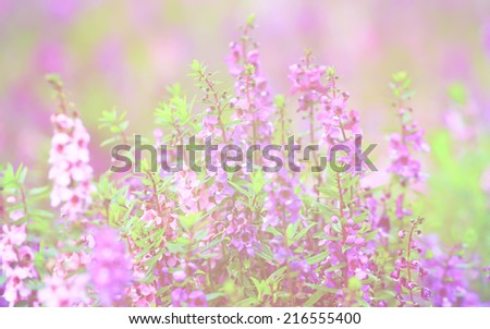 Forget Me Not in soft color and blur style for background with soft focus - stock photo
