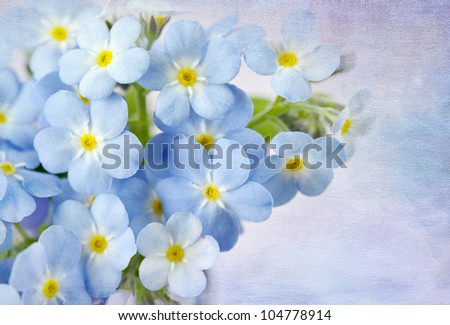 Forget me not on blue background - stock photo