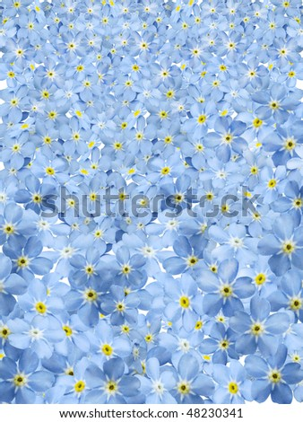 forgetmenot background - stock photo