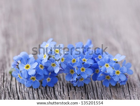 Forgetmenot flowers on a wooden background - stock photo