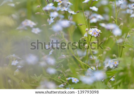 Forgetmenots in an artistic setup with pastel colours anda blurred bokeh - stock photo
