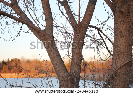 Forked tree riverside - stock photo