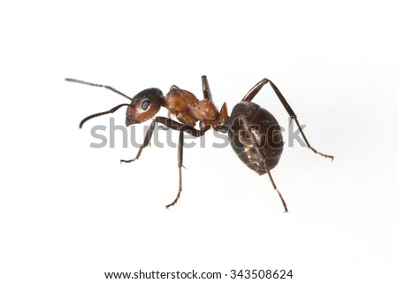 Ant Stock Images RoyaltyFree Images Vectors Shutterstock