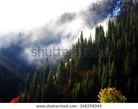 Forrest in autumn with mist sunlight and clouds trees mountains