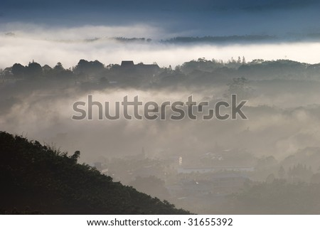 forrest in mist - stock photo