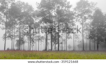 Forrest of green pine tree on mountainside with mist - stock photo