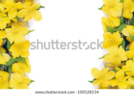 Forsythia flowers border - stock photo