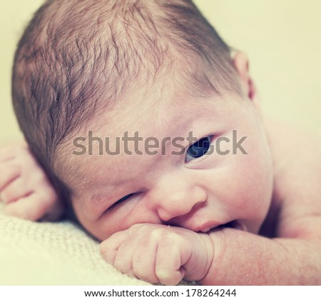 fortnight newborn baby lying on a stomach  - stock photo