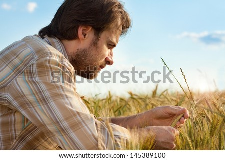 Forty years old farmer control his wheat cultivation field - stock photo
