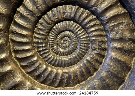 Fossil Ammonite Closeup - stock photo