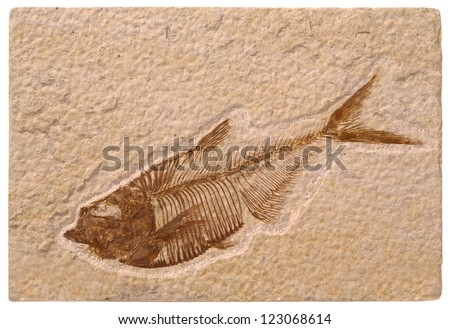 Fossil Fish - stock photo