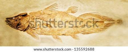 FOSSIL FISH DETAIL - stock photo