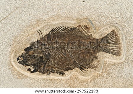 Fossil of a fish. - stock photo