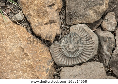 fossil on red stone background - stock photo