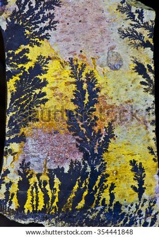 fossil plants - stock photo