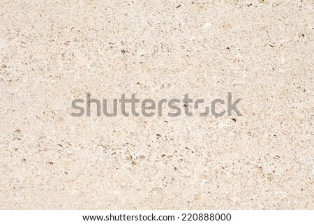fossil shells - stock photo