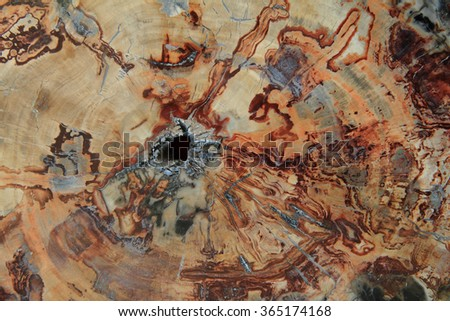 fossil wood texture as natural stone background - stock photo