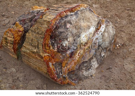 Fossilized wood in Escalante Petrified Forest State Park, Utah, USA (Tree trunk is arond 3ft / 1m in diameter) - stock photo
