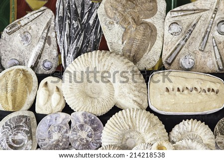 Fossils in an old market, detail of a fossil stone, classical archeology - stock photo