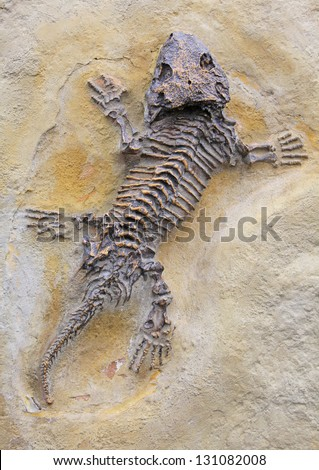 Fossils in Zoo Prague, Czech republic - stock photo